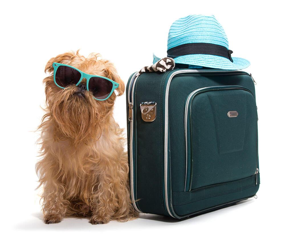 dog-boarding-brooksville-spring-hill